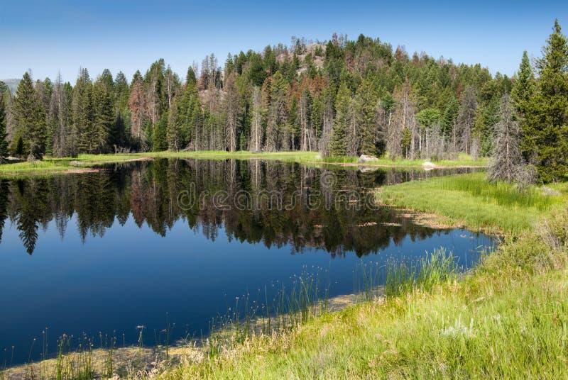 wzdłuż byway naczelnego Joseph jeziora scenicznego obrazy royalty free