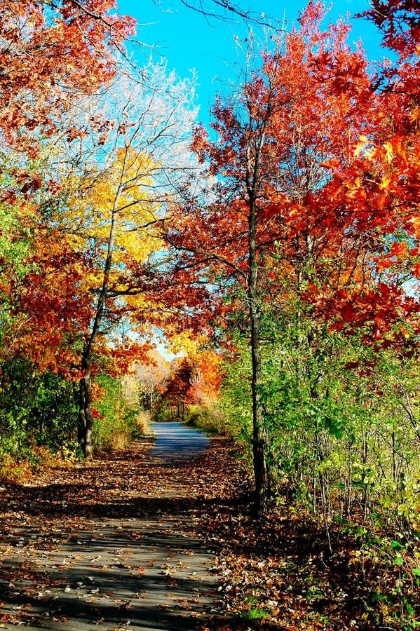 wzdłuż drogi liści jesienią ziemi fotografia stock