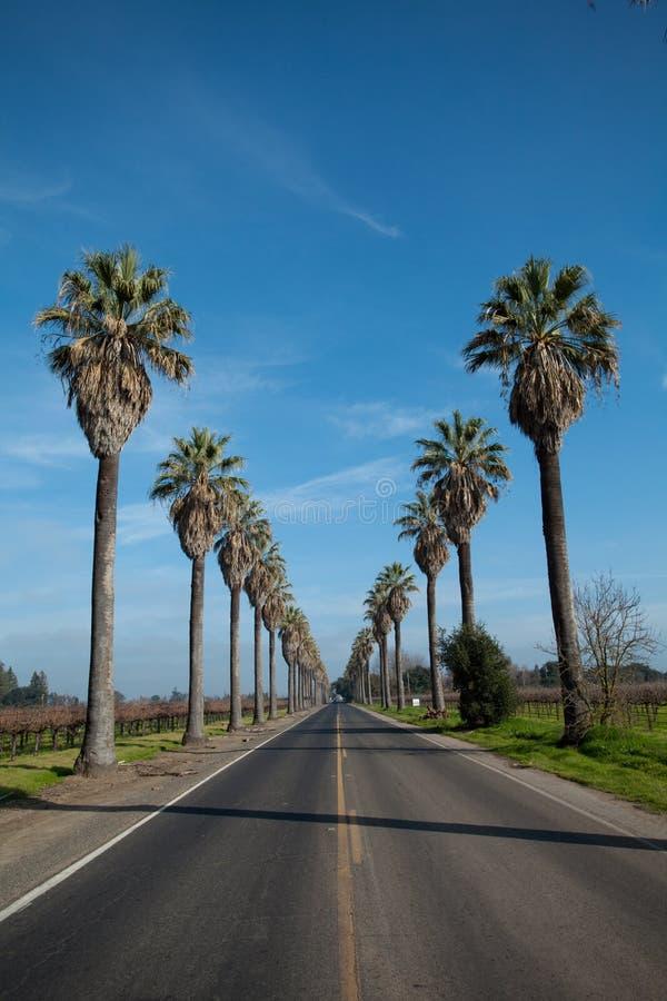 wzdłuż palmowych drogowych rzędu strony drzew zdjęcie royalty free