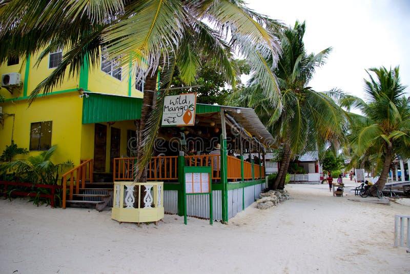 Wzdłuż plaży Dzikiego mango restauracja w San Pedro, Ambrowy Caye, Belize fotografia stock