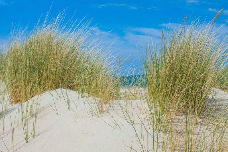 Wzdłuż plaży Zeeland zdjęcie stock