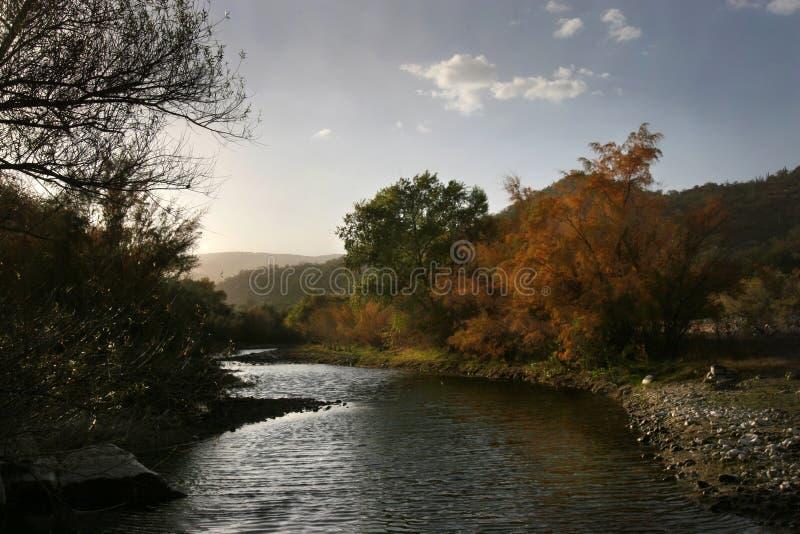 wzdłuż rzecznych solankowych drzew zdjęcia royalty free