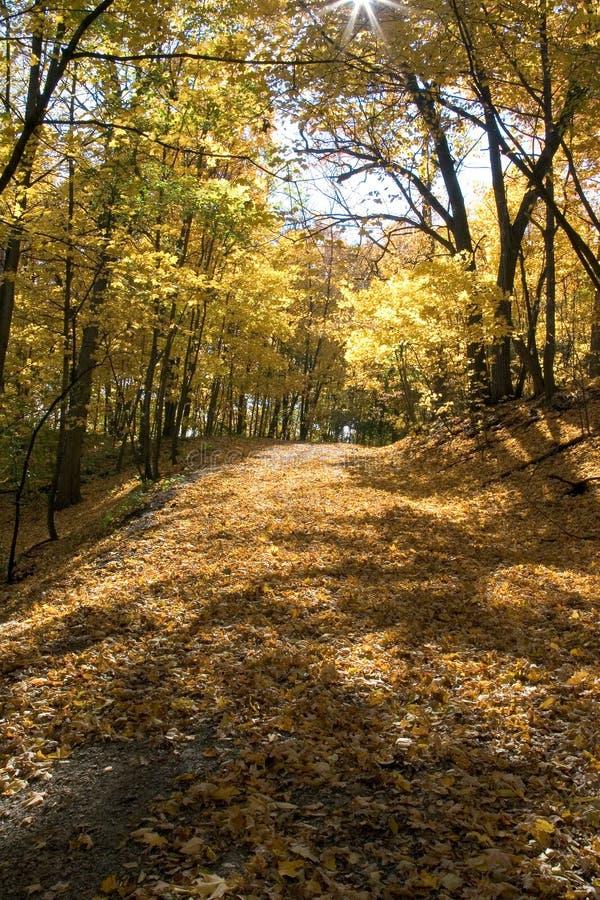 wzdłuż rzeki mississippi, Minneapolis jesienią obrazy stock