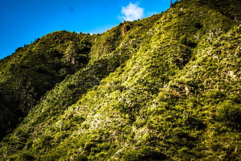 Wzgórze w żyznej dolinie flora, roślinność w różnych cieniach zieleń obraz stock