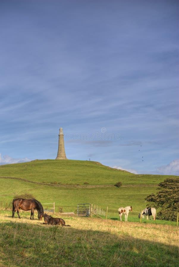 wzgórza hoad koni zdjęcie stock