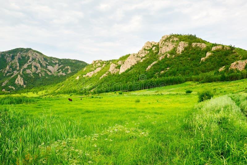 Wzgórza i obszar trawiasty obrazy stock