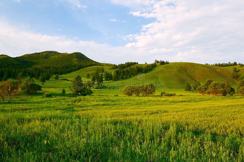 Wzgórza i pole uprawne zdjęcie royalty free