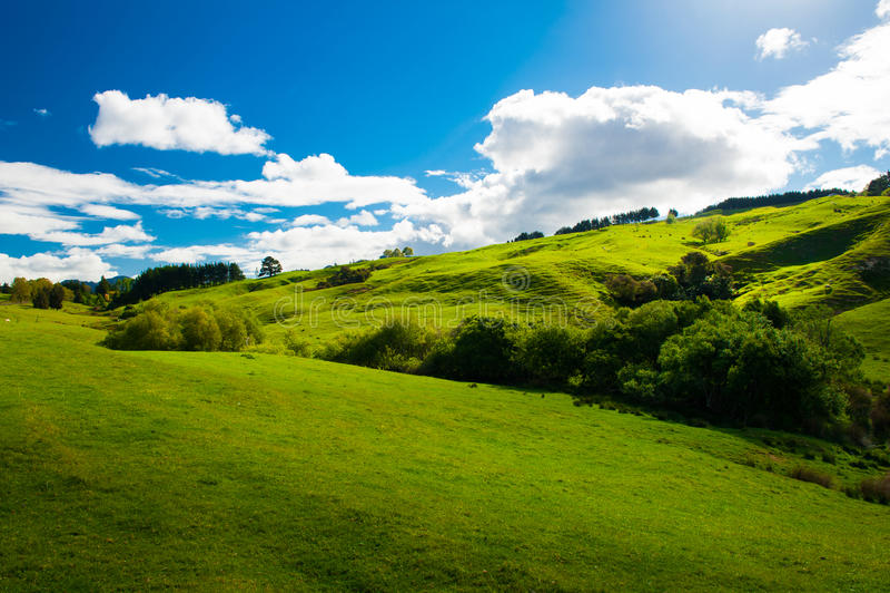 Wzgórza Nowa Zelandia obraz stock