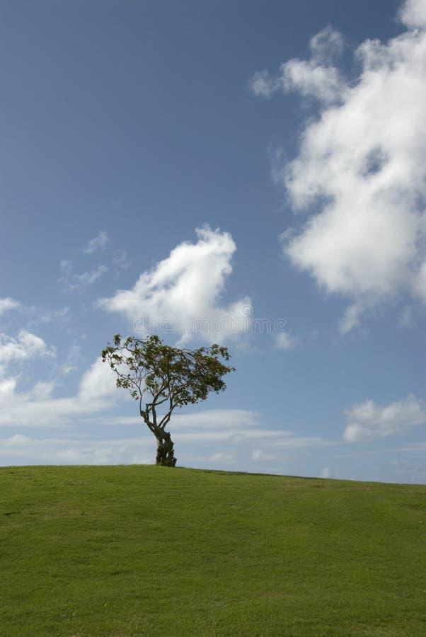 wzgórza pojedyncze drzewo fotografia royalty free