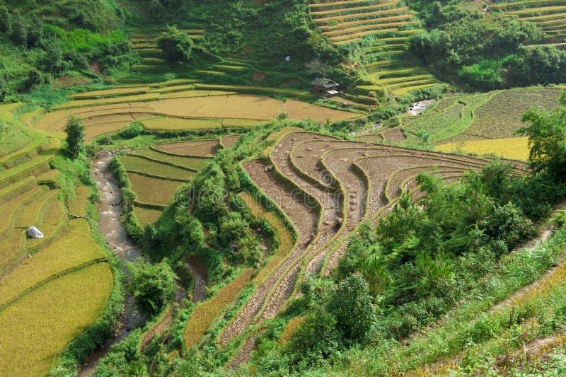 Wzgórza ryżowi tarasy po zbierać fotografia stock