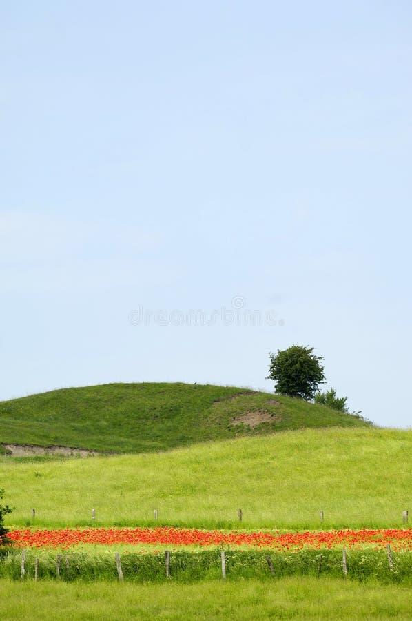 wzgórza zielone drzewa obraz royalty free