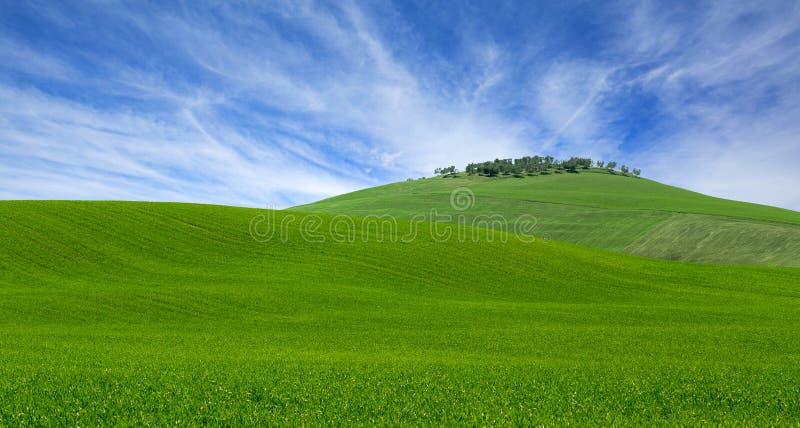 Wzgórze łąka w wiośnie fotografia stock