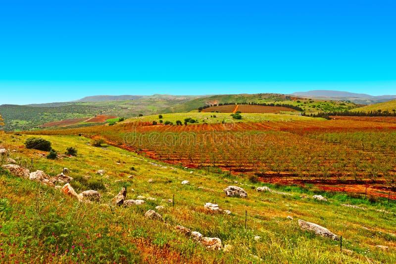Wzgórze Golan obraz royalty free