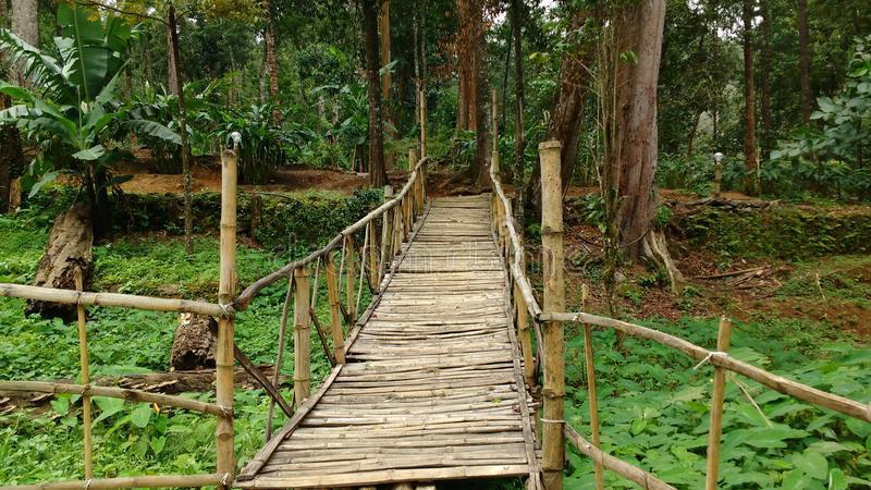 Wzgórze kurortu drewniany most zdjęcie royalty free