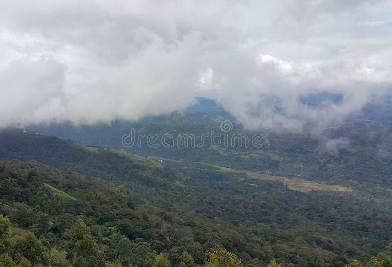 Wzgórze w Munnar, Kerala, India zdjęcie royalty free