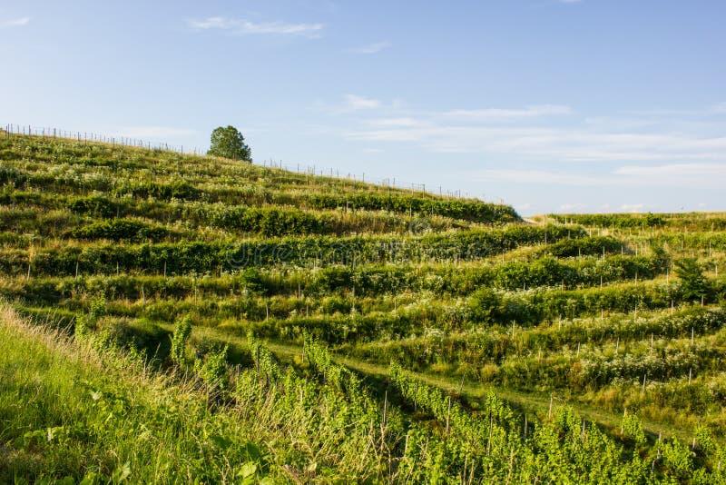 Wzgórze w północnym Chorwacja zdjęcia stock