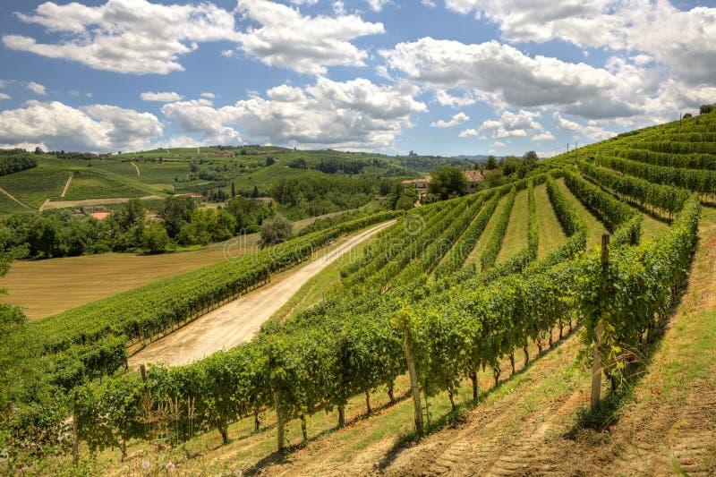 wzgórzy Italy Piedmont winnicy obraz stock