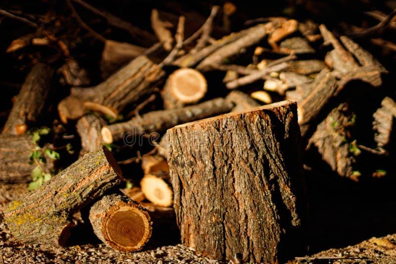 Wziąć ten obrazek podczas gdy chodzący przez drewien blisko mój domu Ja jest drewnem wynikający od ciąć suche gałąź t zdjęcia royalty free