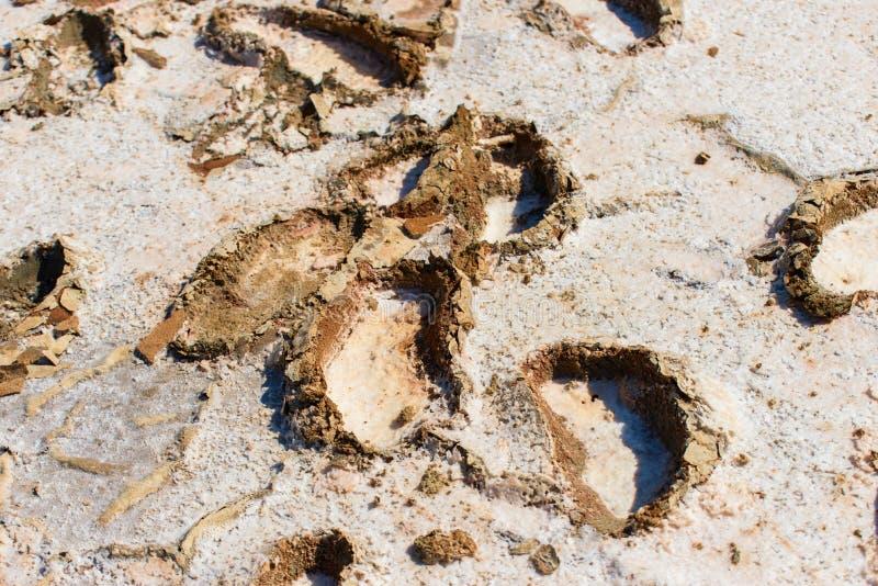 Wzmacniający odciski stopy w słonym jeziorze Alyki, wyspa Limnos fotografia stock