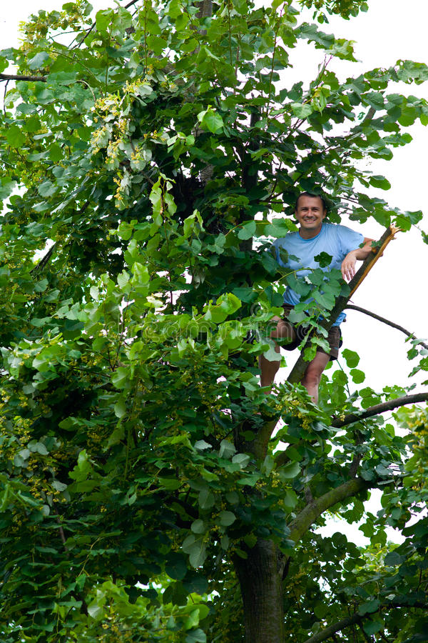 wzniesiony mężczyzna tilia drzewo obraz stock