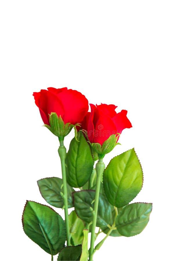 Wzrastał kwiaty na białym tle Z ścinek ścieżką zdjęcie royalty free