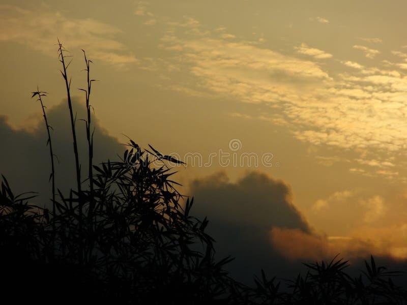 Wzrastać z ranku słońcem obrazy royalty free