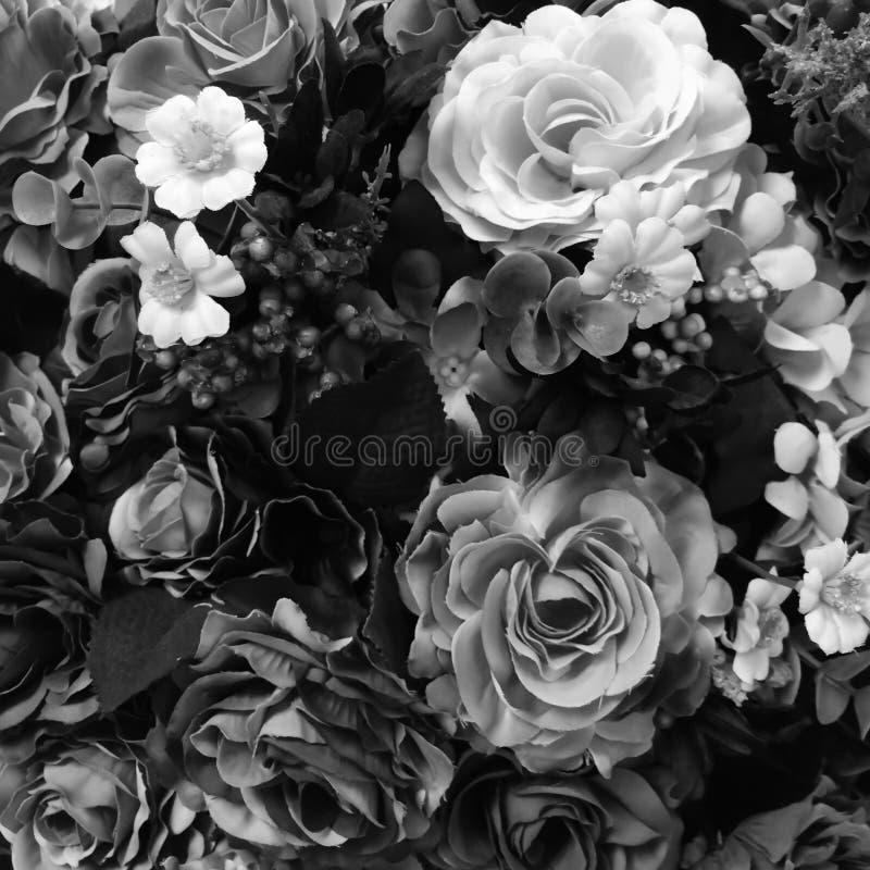 Wzrastał czarny i biały koloru pojęcie obrazy royalty free