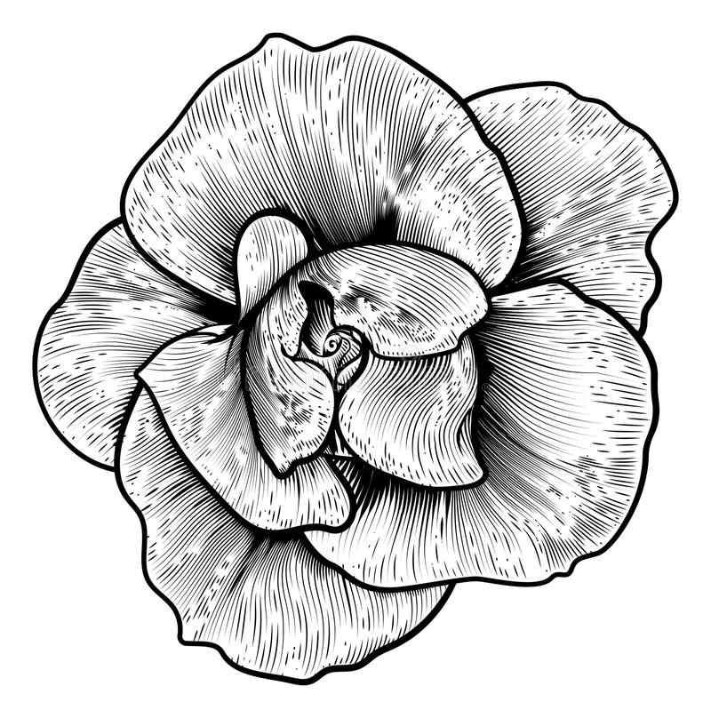 Wzrastał kwiatu Woodcut rocznik Grawerującą akwafortę ilustracji