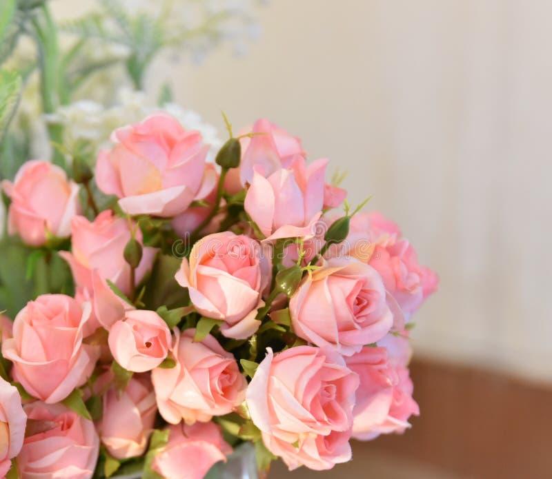 Wzrastał menchia kwiatu obrazy royalty free