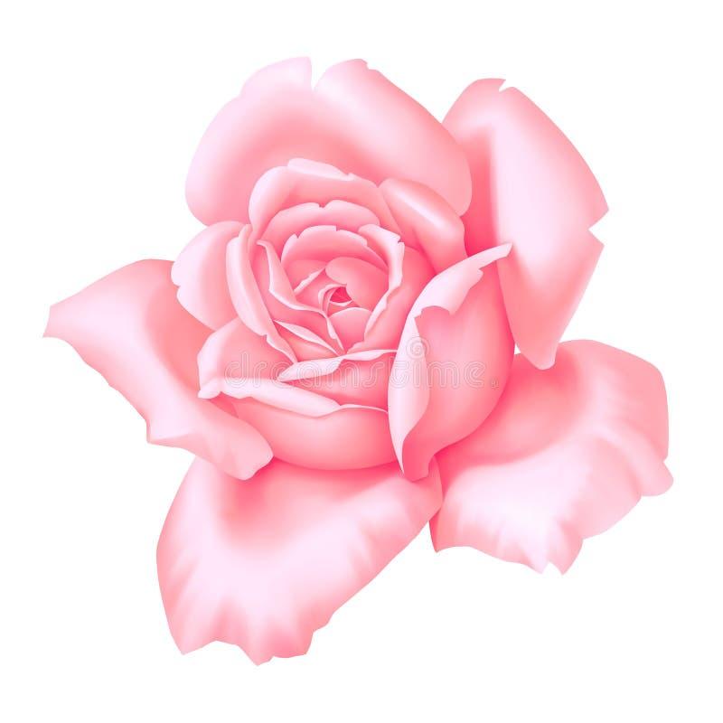 Wzrastał menchia kwiatu rocznika dekoracyjną ilustrację odizolowywającą na białym tle royalty ilustracja