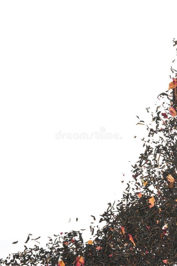 Wzrastał natchnącego czarnej herbaty tło fotografia royalty free