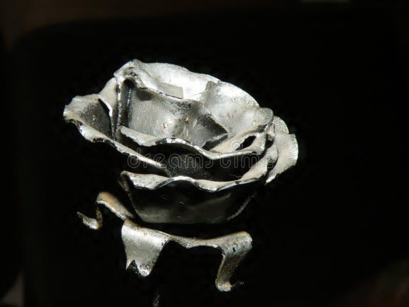 wzrastał srebro obrazy royalty free