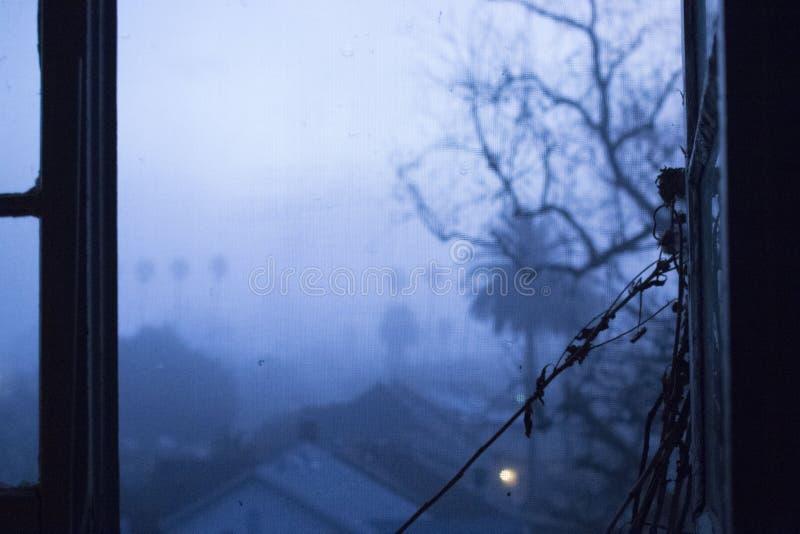 Wzrastał wśród mgły obrazy stock