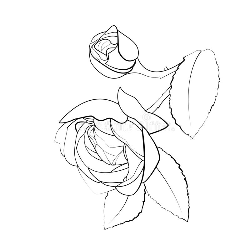 Wzrasta? kwiatu na bia?ym tle ilustracja wektor