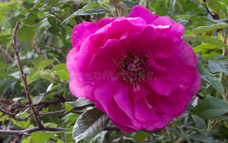 Wzrasta? kwiatu fotografia royalty free