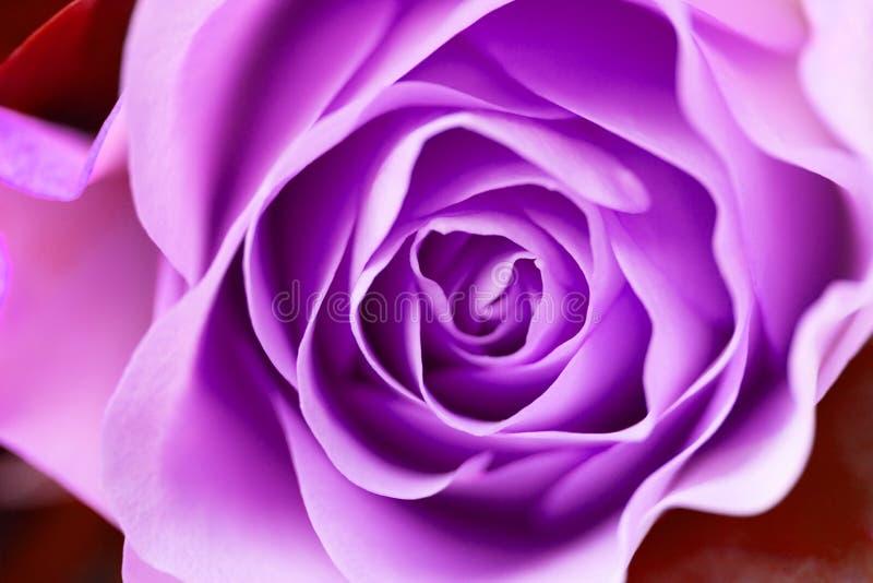 Wzrasta? kwiatu zako?czenie up obrazy royalty free