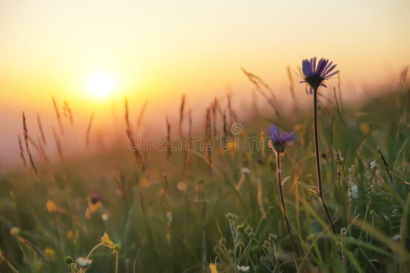 wzrosta słońce obrazy royalty free