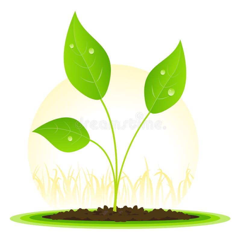 wzrostowa roślina ilustracja wektor
