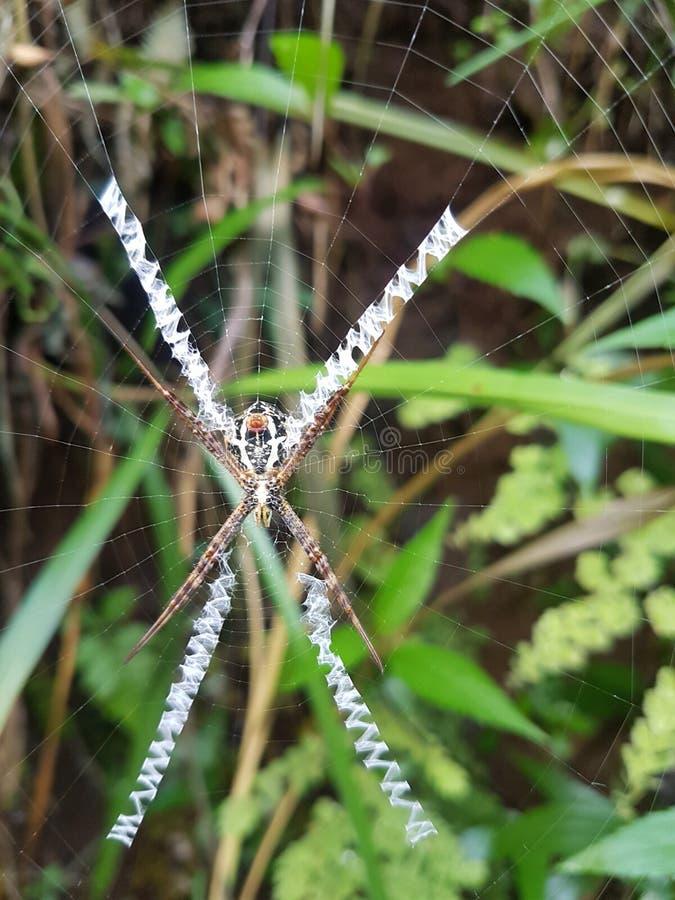 X狂放的蜘蛛陷井和KAMUFLAGE 库存照片