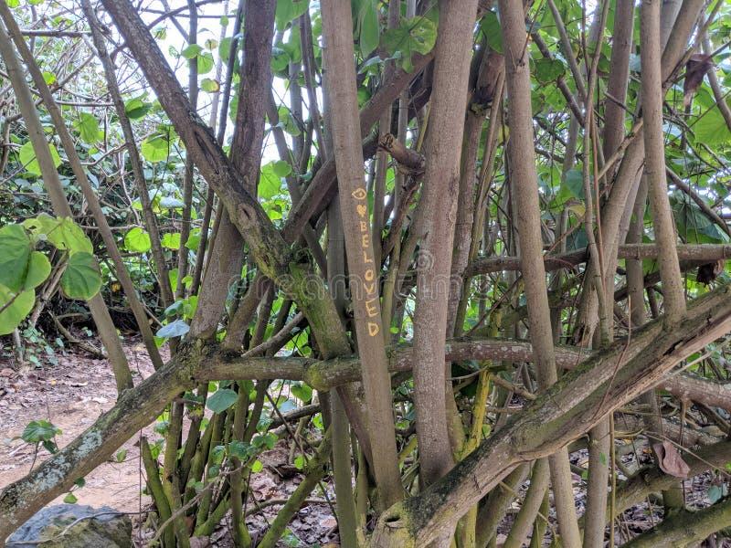 & x27; Älskling & x27; skriftligt på träd i trän arkivfoton