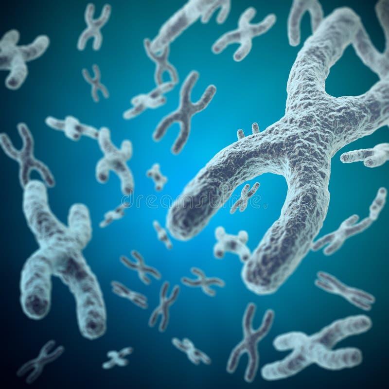 X-хромосомы как концепция для исследования генетики генотерапии или микробиологии символа человеческой биологии медицинского 3d иллюстрация штока