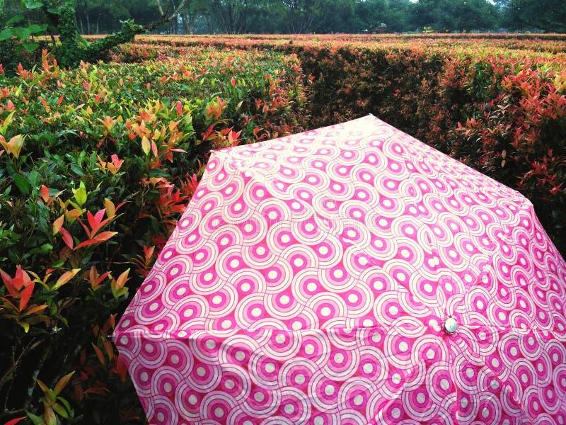 It& x27; 去的s下雨 图库摄影