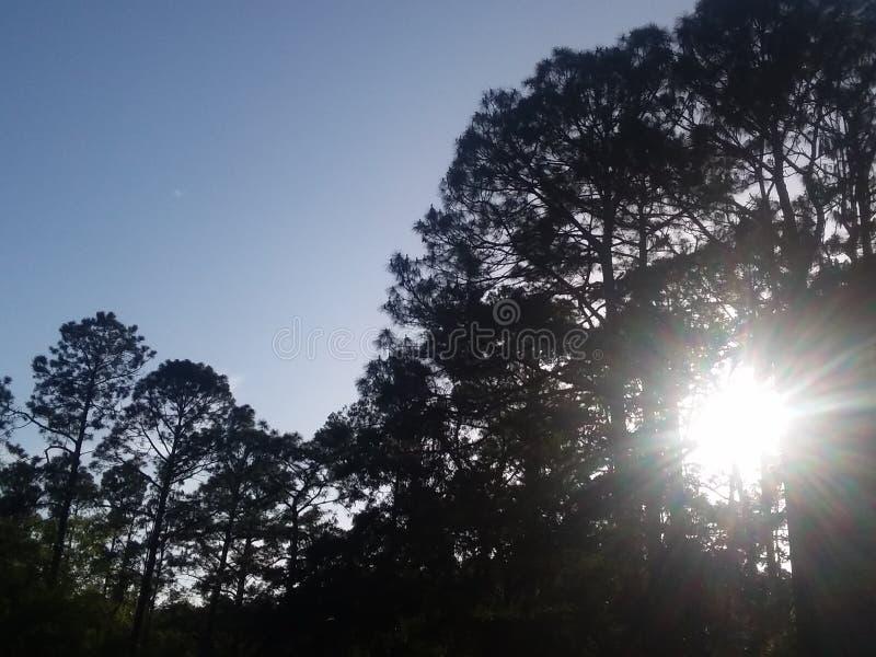 & x22; 在Georgia& x22南部的美丽的天空; 图库摄影
