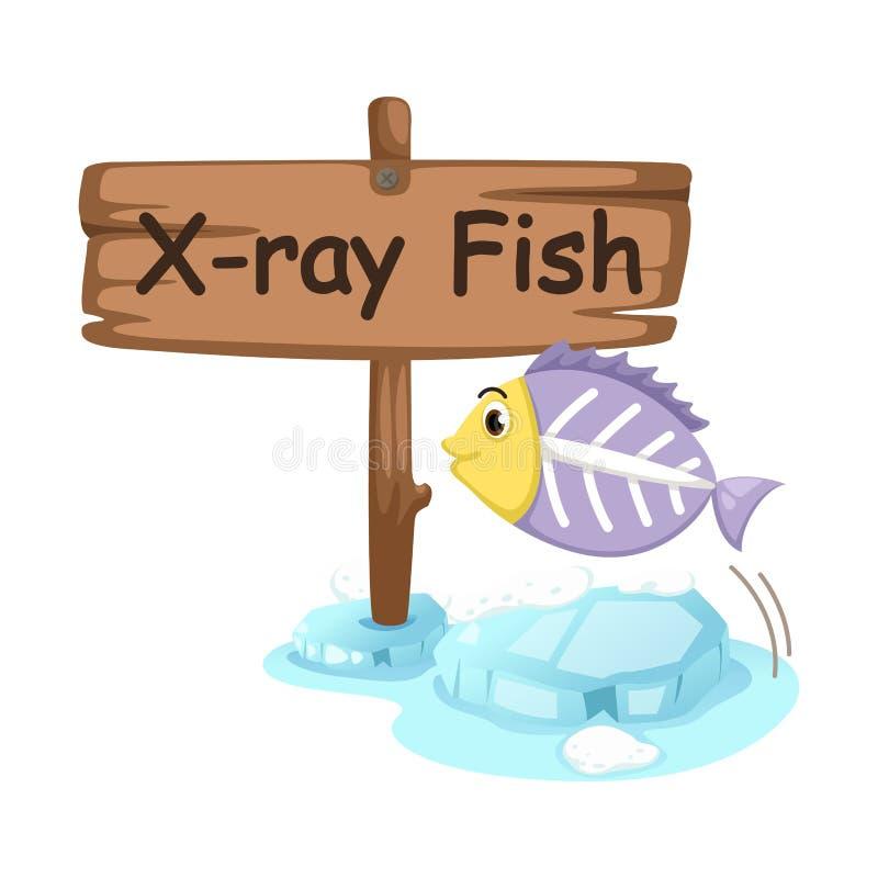 X-射线鱼的动物字母表信件x 向量例证