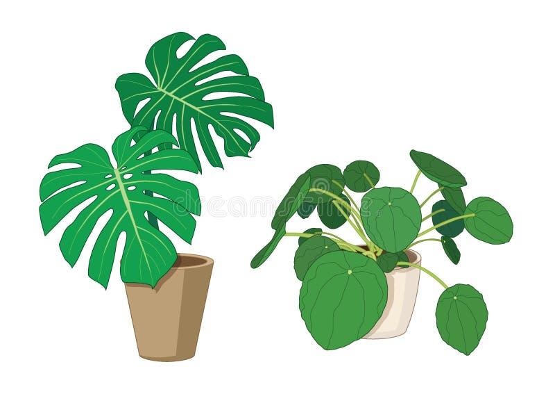 Bon trees in pots fresh vector illustration