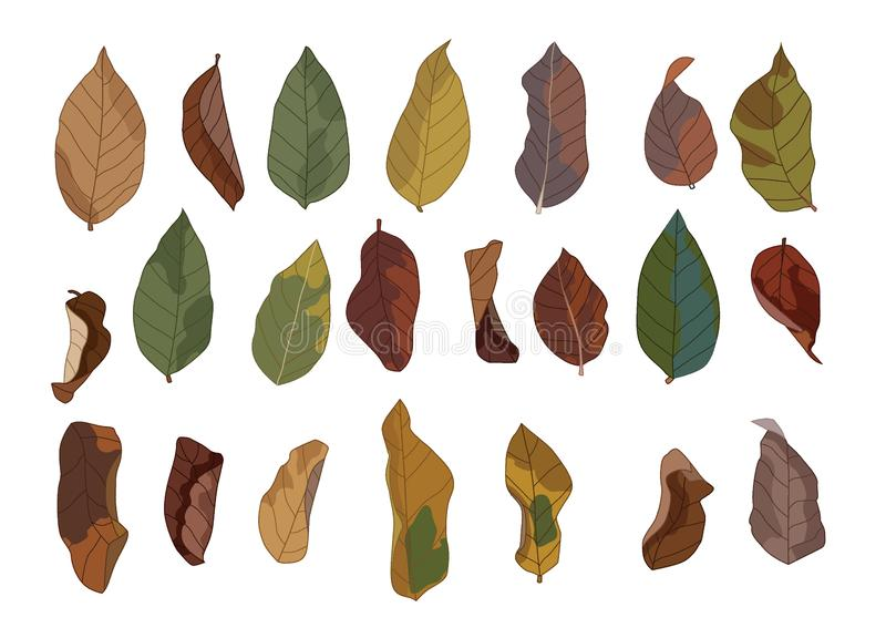 Colour brown dry leaf paint and Brown dry leaves autumn Down the ground. On white background illustration vector vector illustration
