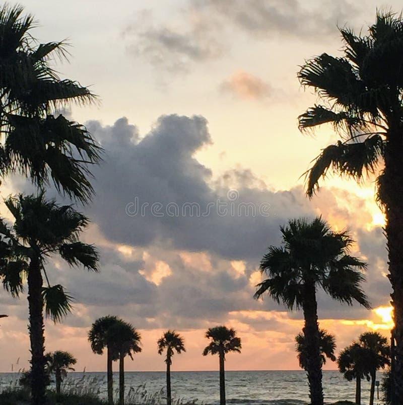 & x22; Al I-behoefte is palmen en een weinig paradijs! & x22; royalty-vrije stock foto's