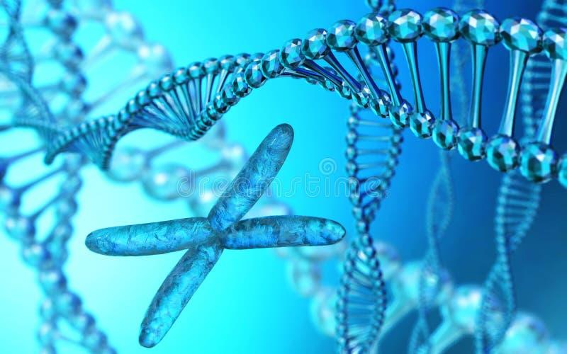 X-Chromosom, gewundene DNA, Wiedergabe 3d lizenzfreie abbildung
