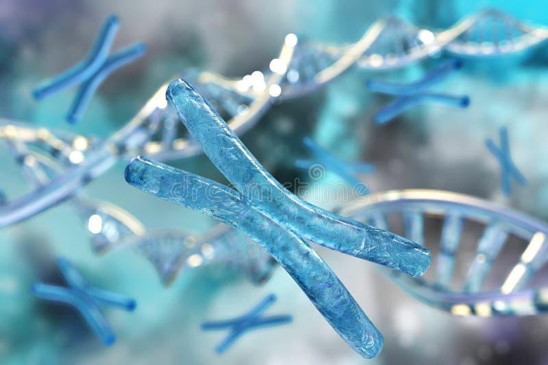 X-Chromosom und DNA vektor abbildung