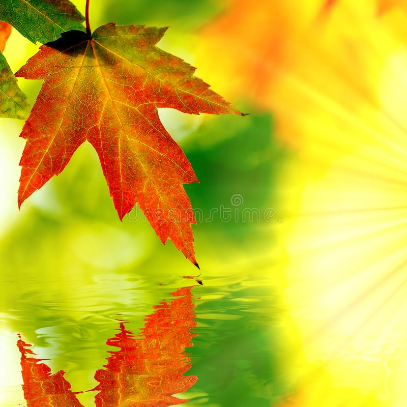 Autumn Maple Leaf Reflection. Autumn maple leaf  and reflection with sun rays stock image